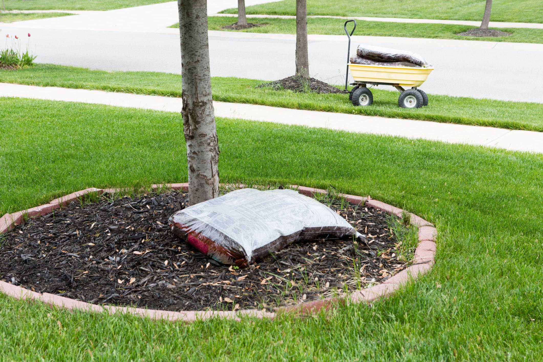 Suburban Tree Service - Tree Fertilization