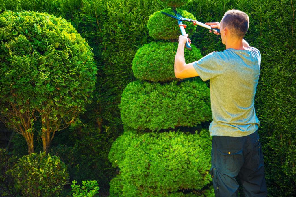Suburban Tree Service - Tree Pest and Disease Management