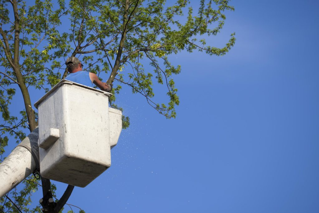 Suburban Tree Service - Tree Pruning and Trimming